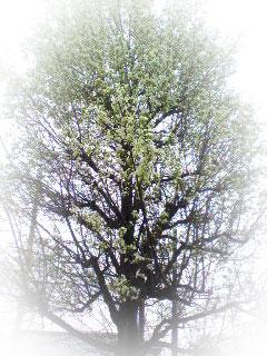 名前を知らない樹