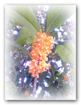 Image541